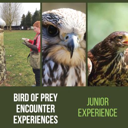 Junior 45 minute Falconry Experiences